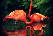Biautiful animals