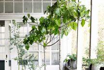 Cobello • Garden