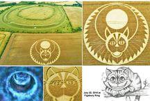 Crop segni nel grano