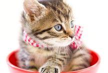 ♥ Cute Kittens ♥