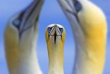 Birds/Pelecaniformes / by Debbie Beals