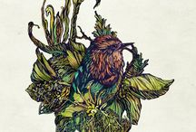 Illustrated birds / My bird illustrations and paintings