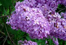My favorite flowers / by Leigh Lee