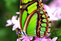 Schmetterlinge + Motten + Insekten