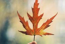 Autumn / Inspiration