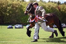 Fell Pony Show, Lake District, UK / Dalemain House, Ullswater.
