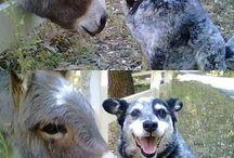 Dogs! / by Amanda Warner