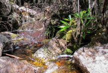 Rivers / Views and details of Tasmanian rivers