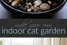 Cat Grasses & Gardens / Enrich your indoor cats and keep them safe with these indoor cat grass and cat garden ideas!