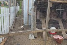 Aviary - Build Aviary / How to build an outdoor aviary? ►1: Poultry Netting and Material  ►2: Chicken run framing - Frame Construction  ►3: Install aviary netting - Chicken wire netting