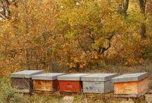 cuidado abejas