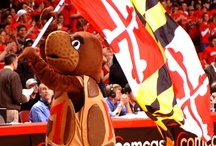 Testudo! / The great Mascot of Maryland Athletics / by Maryland Terrapins