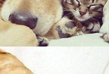 Cute animals❤