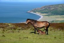 Exmoor National Park / Dramatic, windswept moor of shimmering purple heather and lush green tumble down to a dramatic coastline of a towering cliffs and lovely hidden beaches. Exmoor is a wild land, with biodiversity and a cultural heritage to match: let us show you how to make the most of it without leaving more than a footprint.