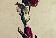 Flores / rosas, girassois,açucena, outras flores e plantas