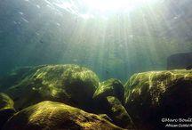 Beiträge Malawisee Aquaristik
