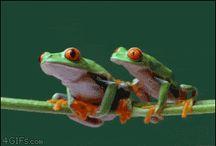 Žába k žábě sedá, rovný rovného si hledá.