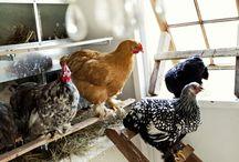 Chick a Dee / by Joy Mott