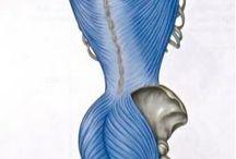 Myofasial Askı