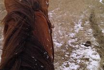 Ponies! / How many horses do I have? Too many.