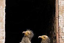 birds / by Lana Lansford Somerville