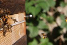 Bees & wildlife gardening