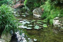 Ramdoms trädgård / Idéer till min park