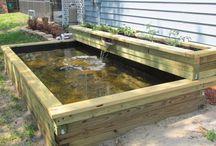 Pond and garden ideas