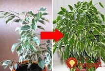 ošetrovanie rastlín