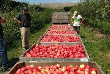 Local Produce / In Hawke's Bay we are truly spoilt for choice and that's why our menu showcases the best local produce.