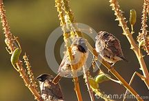 My newest pictures at dreamstime.
