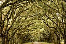 Savannah Trip / by Kay Fredericks