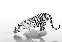 Desenho De Tatuagem De Tigre