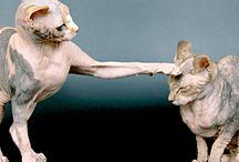Pets / by Christine Olano