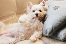 AF's Dogs / Homenagem ao Pongui e a Meg. Só quem tem um cão, sabe o que é,  amor fiel e incondicional. A melhor presença e companhia pra sempre.