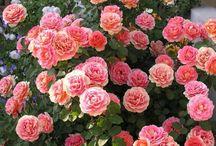Flowers @-}--