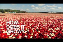From the Farm: Cranberries / Activities and Recipes featuring Cranberries! / by AVI Foodsystems