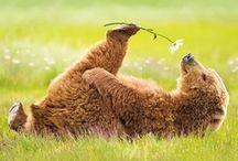 Sweet Teddies