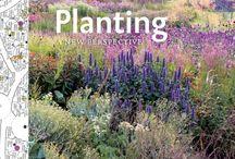 planting strategies / by Mette Romme