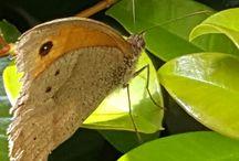 Insecto casa y jardín.  Insect  house and garden / Insectos ( mariposas escarabajos hormigas moscas  Insectos bugs ( butterflies flies beatles ants carterpillars