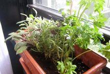Herb garden and veggie garden I need this