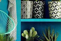 Cactussen / cacti