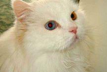Cicusok / Cats