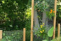 Trädgård