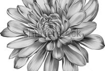 yiayias flower