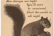 mes écureuils