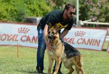 Dog Shows / Greek Dog Shows