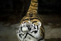 Big Cats ❤️