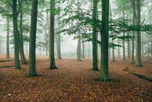 Explore / Woods