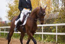 Обучение на этой лошади Малому Призу / Продажа  лошади для обучения  Юношей до Малого Приза и Выше.